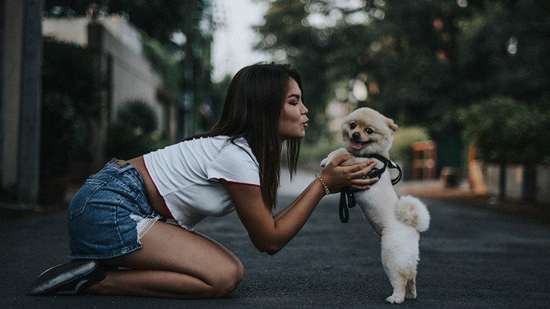 5 Alasan Kenapa Memelihara Anjing Itu Baik untuk Kesehatan Anda